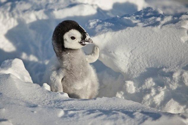 Приколы про пингвинов - смешные и веселые картинки, фото 16