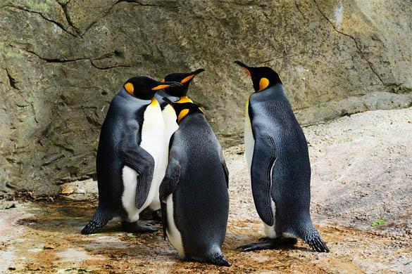 Приколы про пингвинов - смешные и веселые картинки, фото 2