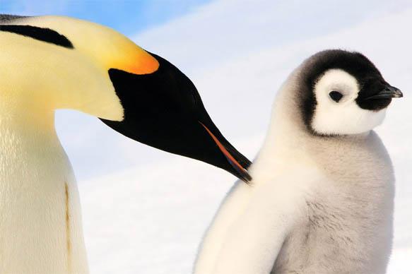 Приколы про пингвинов - смешные и веселые картинки, фото 3