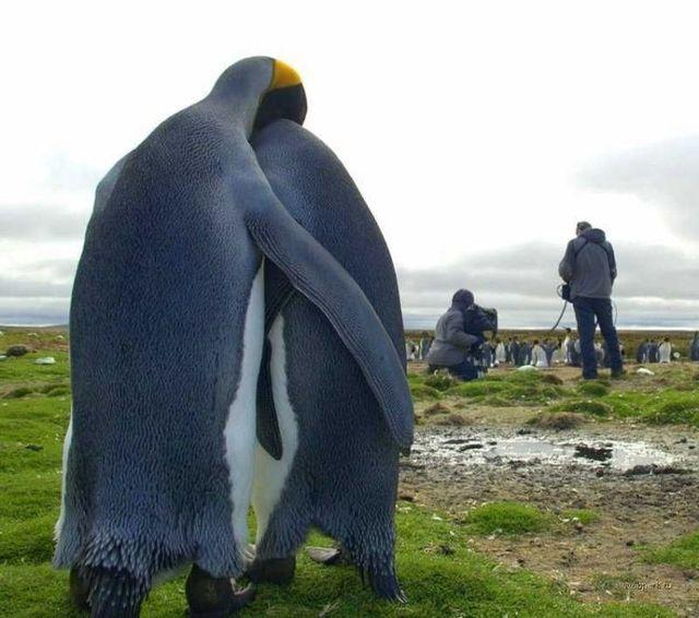 Приколы про пингвинов - смешные и веселые картинки, фото 4