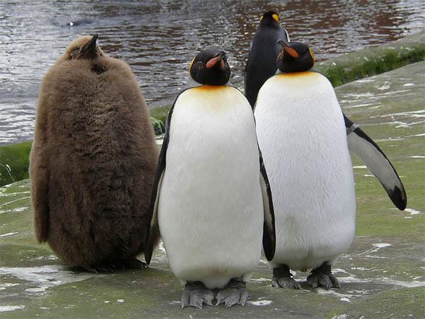 Приколы про пингвинов - смешные и веселые картинки, фото 5