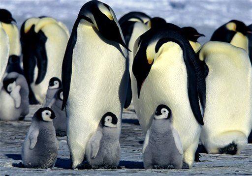 Приколы про пингвинов - смешные и веселые картинки, фото 6