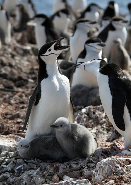 Приколы про пингвинов - смешные и веселые картинки, фото 7