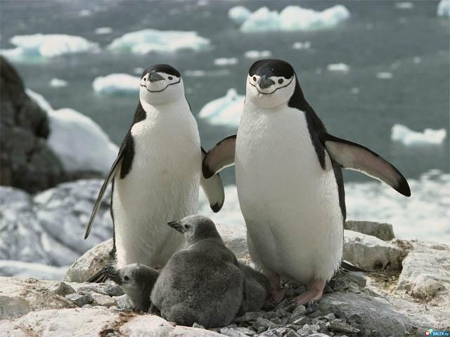 Приколы про пингвинов - смешные и веселые картинки, фото 8
