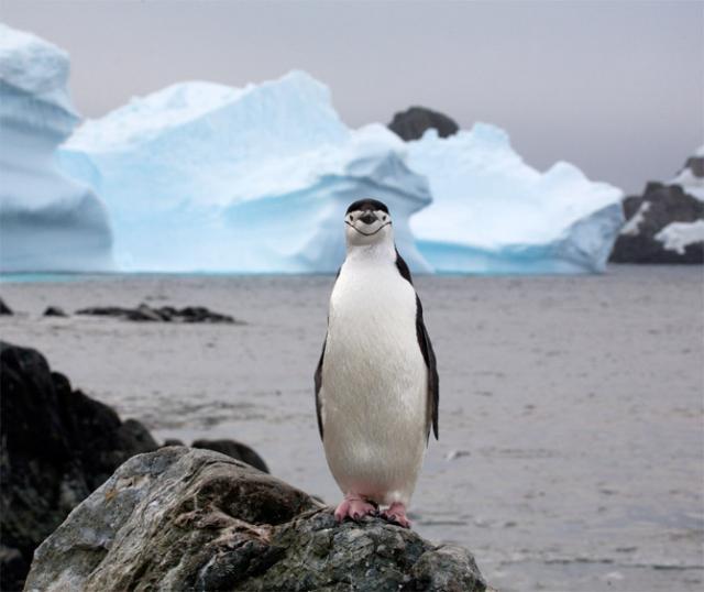 Приколы про пингвинов - смешные и веселые картинки, фото 9