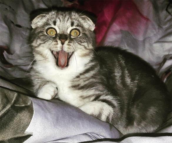 Смешные фото приколы про котов и кошек - смотреть бесплатно, 2017 3