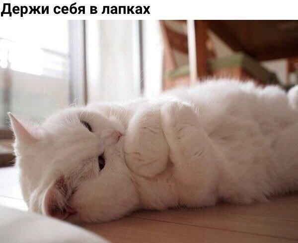 Смешные фото приколы про котов и кошек - смотреть бесплатно, 2017 8