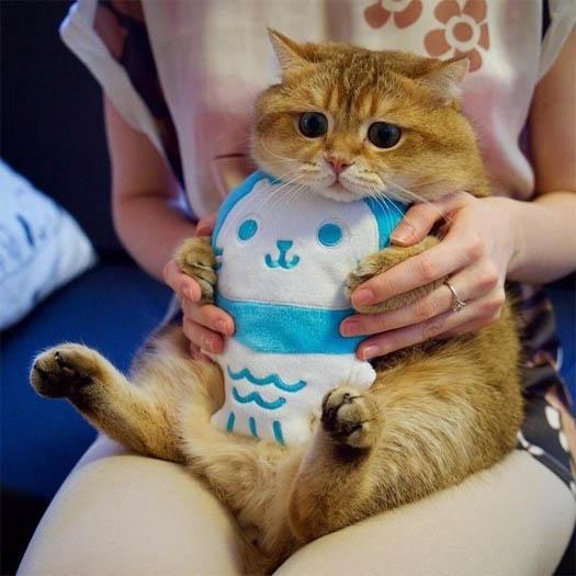 Смешные фото приколы про котов и кошек - смотреть бесплатно, 2017 9