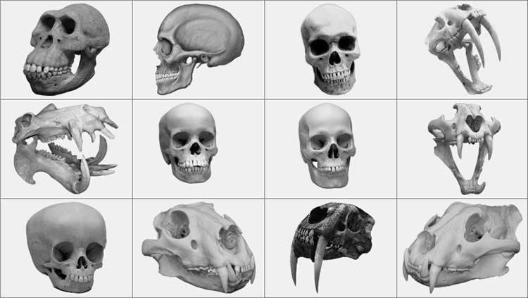Черты сходства и различия человека и животных - основная разница 2