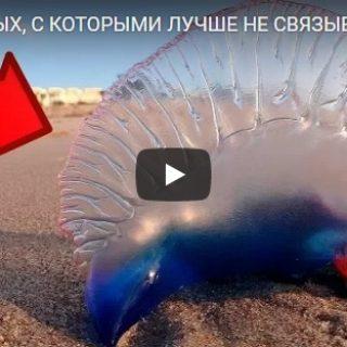 10 существ, с которым лучше не иметь дело - интересное видео