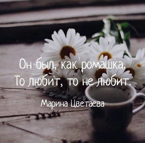 Известные цитаты про жизнь и любовь - самые красивые и интересные 1