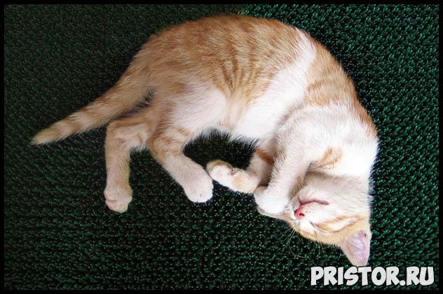 Как узнать возраст котенка - несколько полезных советов и методов 1