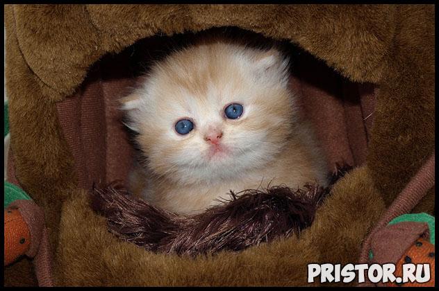 Как узнать возраст котенка - несколько полезных советов и методов 2