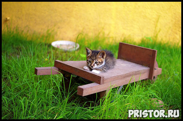 Как узнать возраст котенка - несколько полезных советов и методов 4