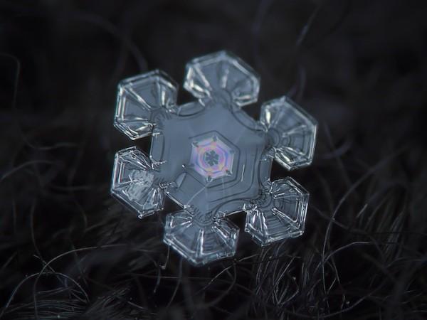 Макрофотография снежинок - самые удивительные и невероятные фото 12