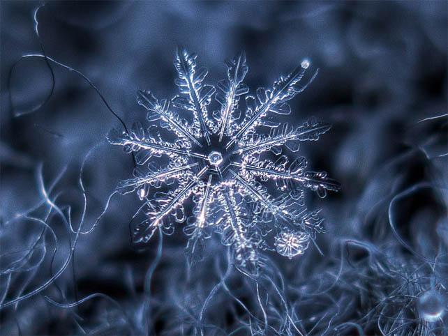 Макрофотография снежинок - самые удивительные и невероятные фото 6