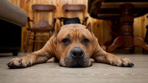 Милые и красивые фото животных на рабочий стол - подборка №2 5