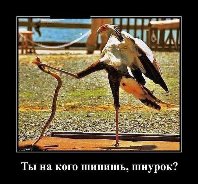 Самые смешные фото приколы про животных - с надписями, подборка №8 2