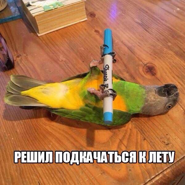Самые смешные фото приколы про животных - с надписями, подборка №8 3