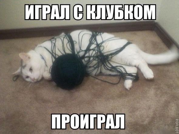 Самые смешные фото приколы про животных - с надписями, подборка №8 6
