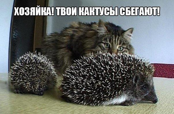 Самые смешные фото приколы про животных - с надписями, подборка №8 8