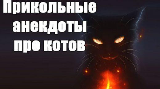 Смешные и прикольные анекдоты про котов и кошек - подборка №59 заставка