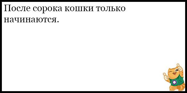 Смешные и прикольные анекдоты про котов и кошек - подборка №59 11