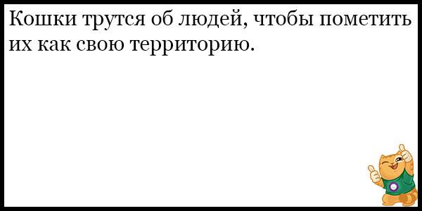 Смешные и прикольные анекдоты про котов и кошек - подборка №59 14