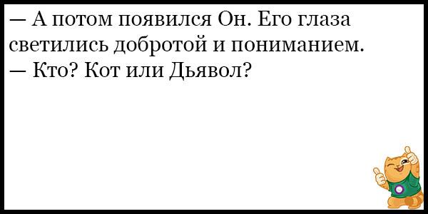 Смешные и прикольные анекдоты про котов и кошек - подборка №59 16