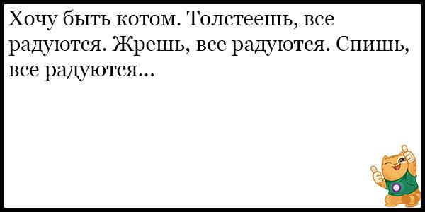 Смешные и прикольные анекдоты про котов и кошек - подборка №59 2