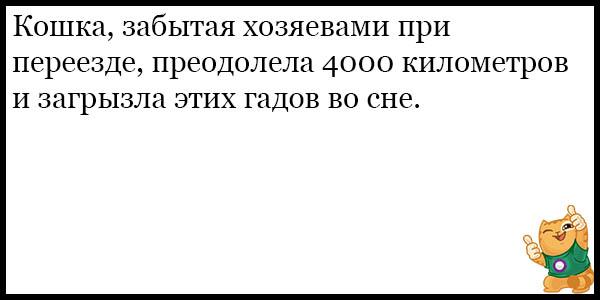 Смешные и прикольные анекдоты про котов и кошек - подборка №59 9
