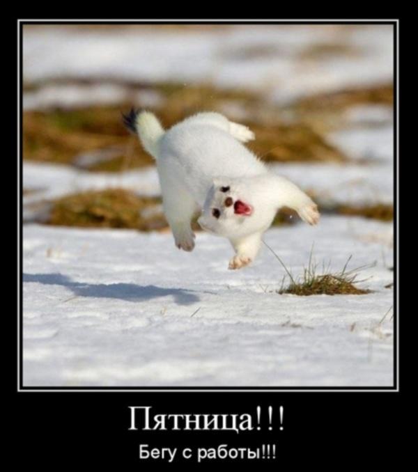 Смешные картинки с надписями до слез для детей с животными 17