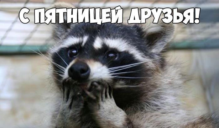 Бесплатно смотреть картинки про животных до слез 12