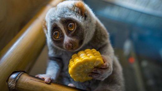 Чем отличаются исчезающие виды животных от редких - главные отличия 2