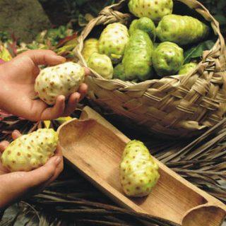 10 самых полезных свойств фруктов Нони - польза для организма 1