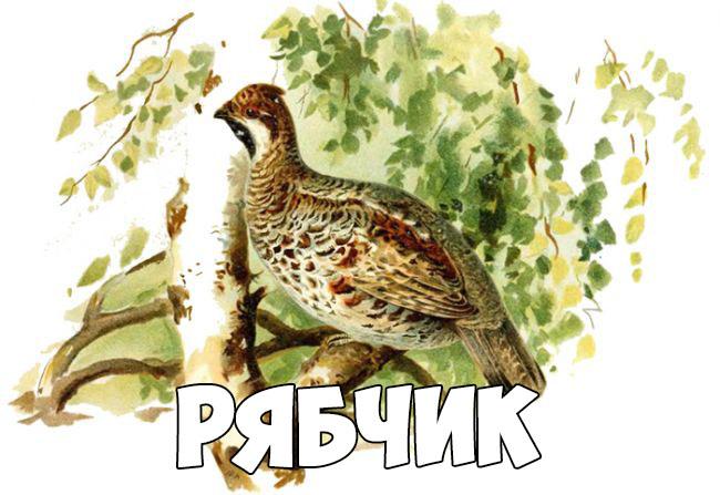 Зимующие птицы картинки для детей - самые интересные и красивые 2