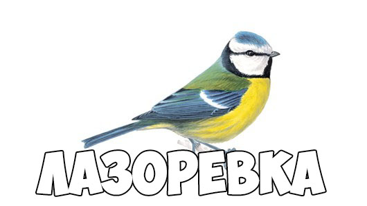 Зимующие птицы картинки для детей - самые интересные и красивые 4