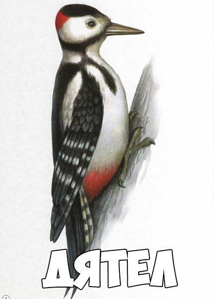 Зимующие птицы картинки для детей - самые интересные и красивые 5