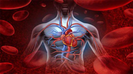 Как улучшить кровообращение организма - лучшие способы и продукты 1