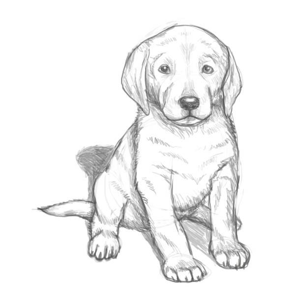 Картинки для срисовки Год собаки - самые прикольные и красивые 10