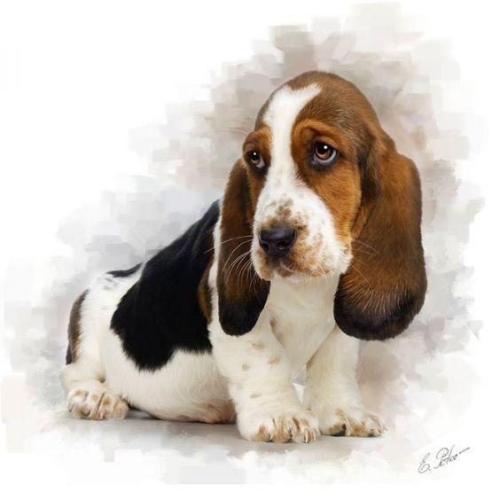 Картинки для срисовки Год собаки - самые прикольные и красивые 9