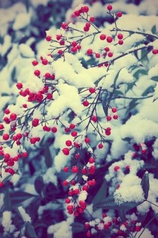 Красивые зимние картинки на телефон - самые интересные, скачать 2018 9