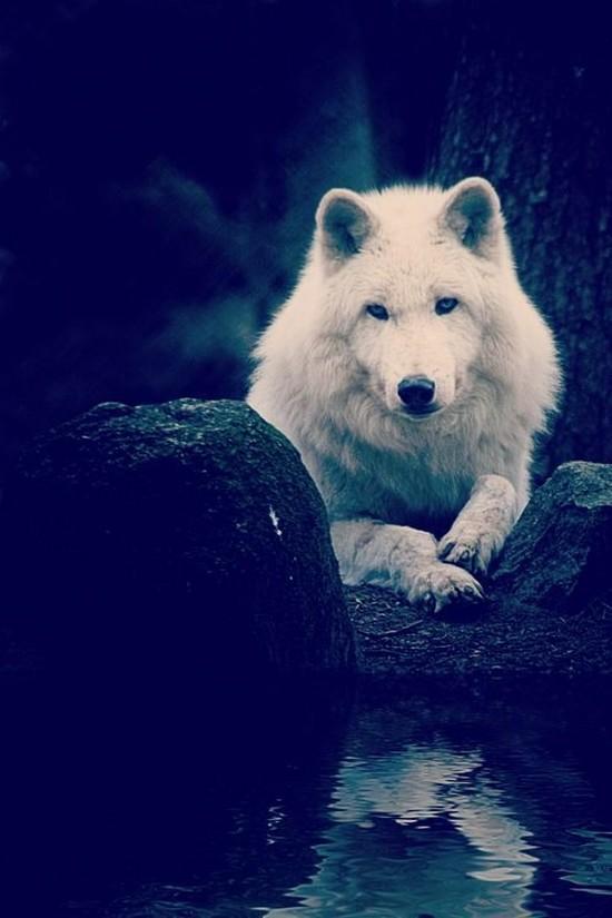 Красивые и прикольные картинки волка на аватарку - скачать бесплатно 11