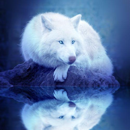 Красивые и прикольные картинки волка на аватарку - скачать бесплатно 4
