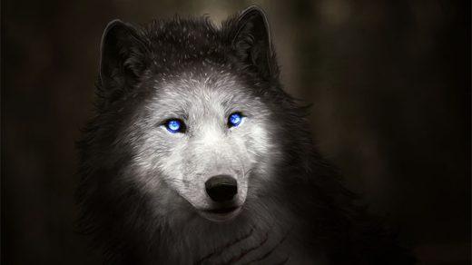 Красивые и прикольные картинки волка на аватарку - скачать бесплатно 5