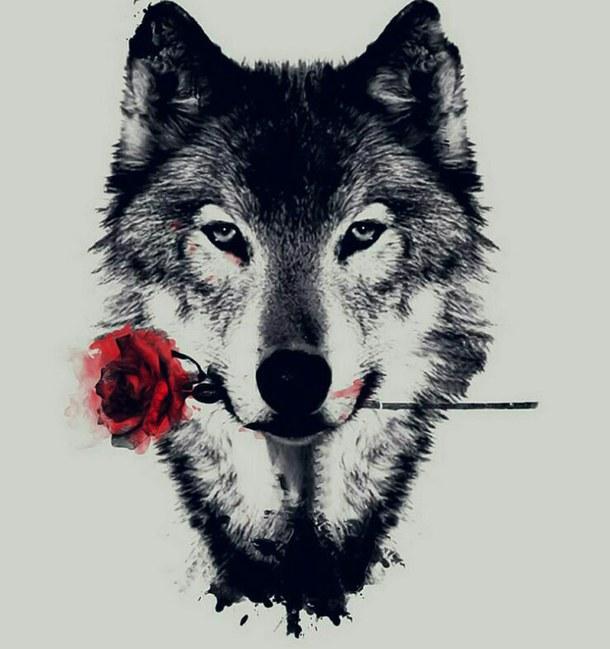 Красивые и прикольные картинки волка на аватарку - скачать бесплатно 6