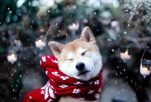 Красивые и удивительные картинки зимы на аву - скачать бесплатно 5