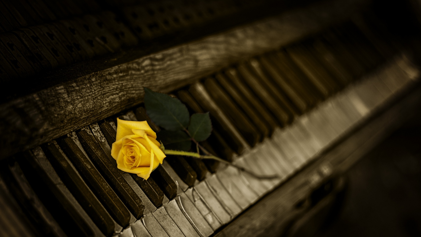 Самые красивые цветы 30 фото - картинки - Фото мир природы