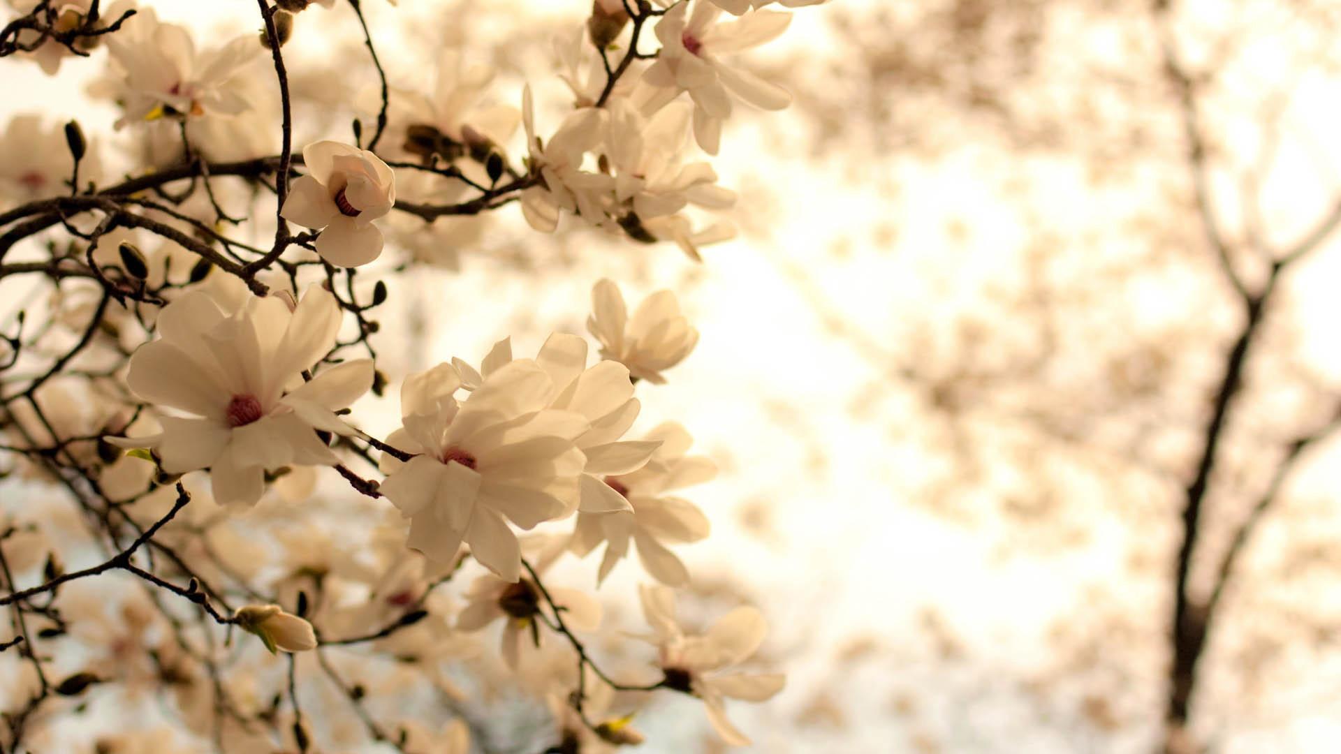 Красивые картинки цветов на рабочий стол - скачать подборка №1 8