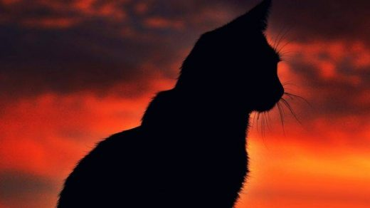 Красивые силуэты кошки картинки и изображения - интересная подборка 11